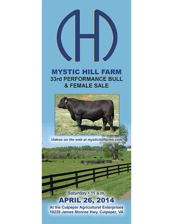 Mystic Hill Farm 33rd Performance Bull and Female Sale