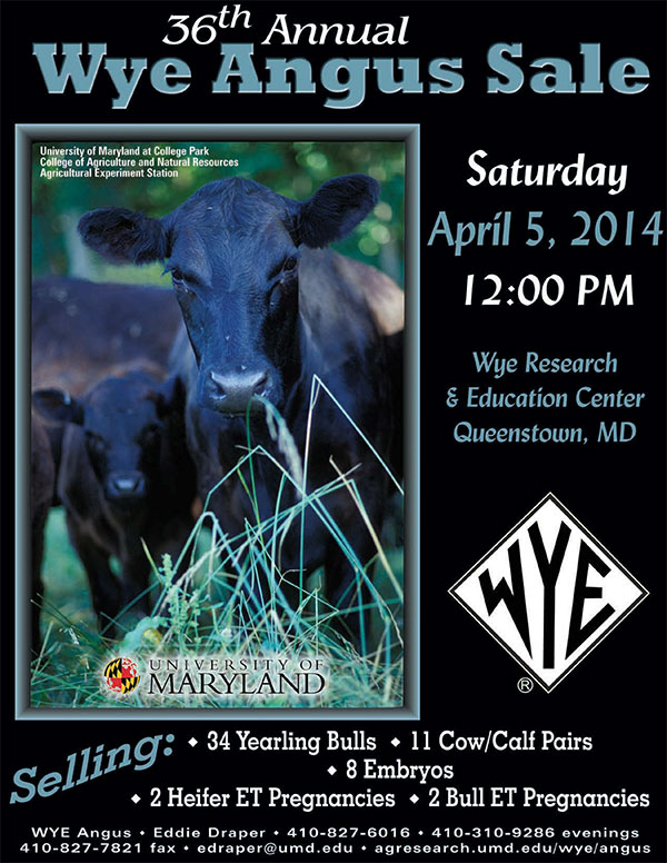 36th Annual Wye Angus Sale