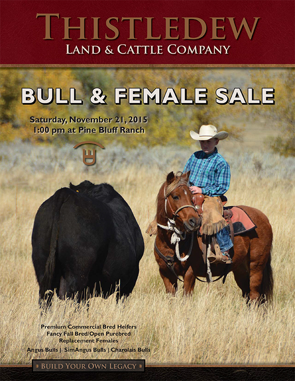 Thistledew Bull & Female Sale