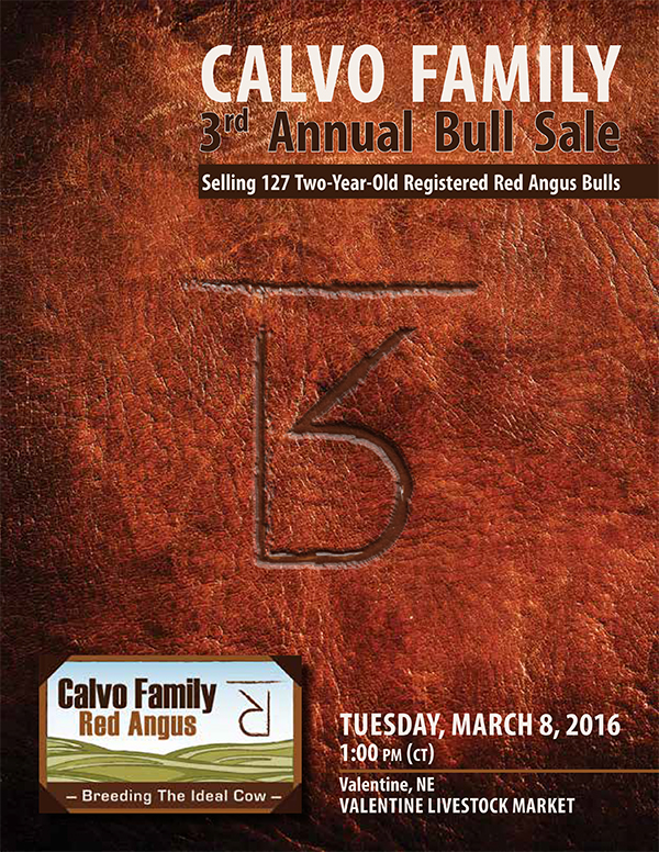 Calvo Family Bull Sale