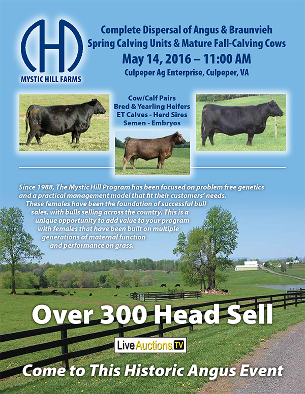 Mystic Hill Female Sale