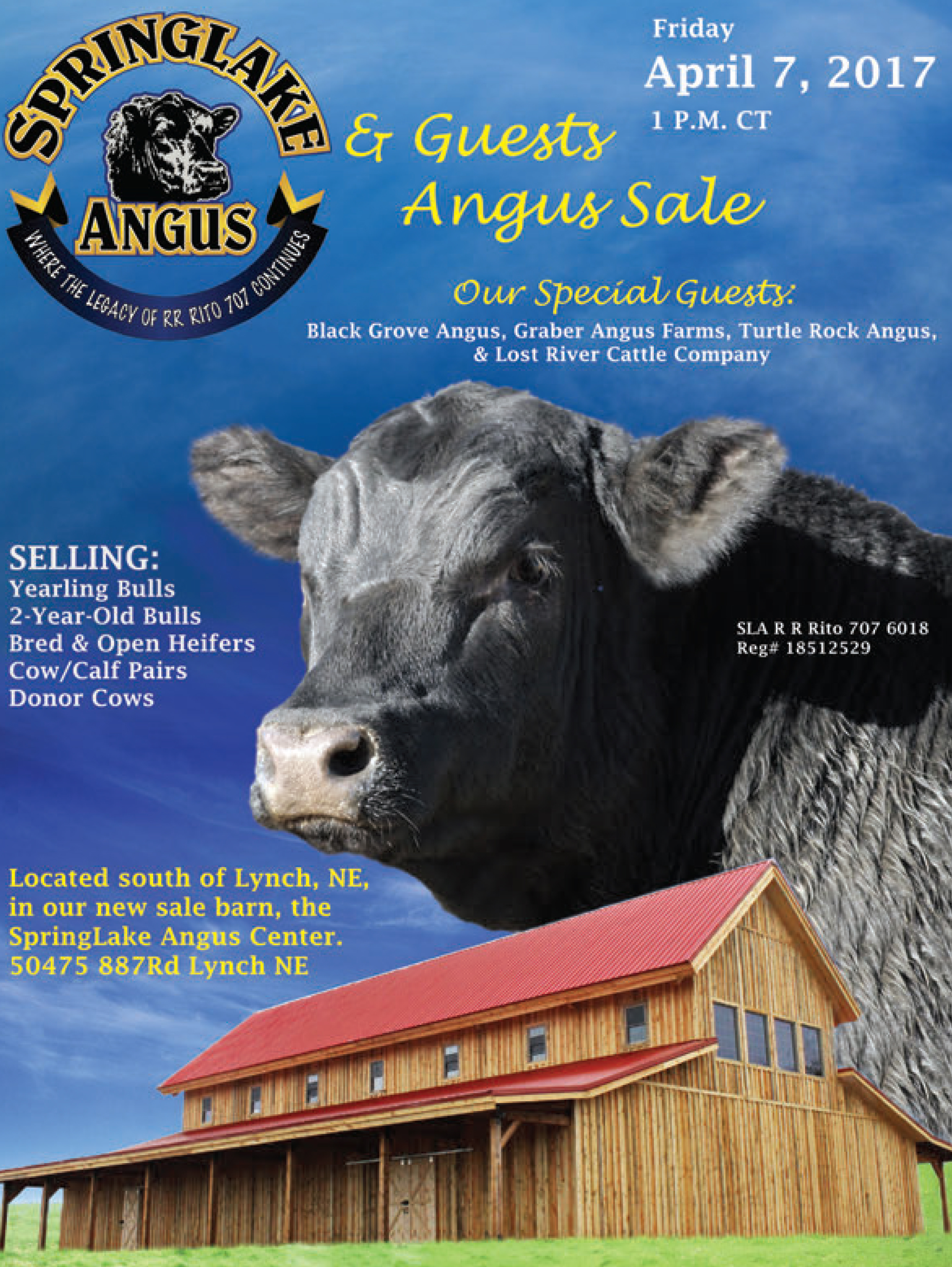 SpringLake Angus and Guest Angus Sale