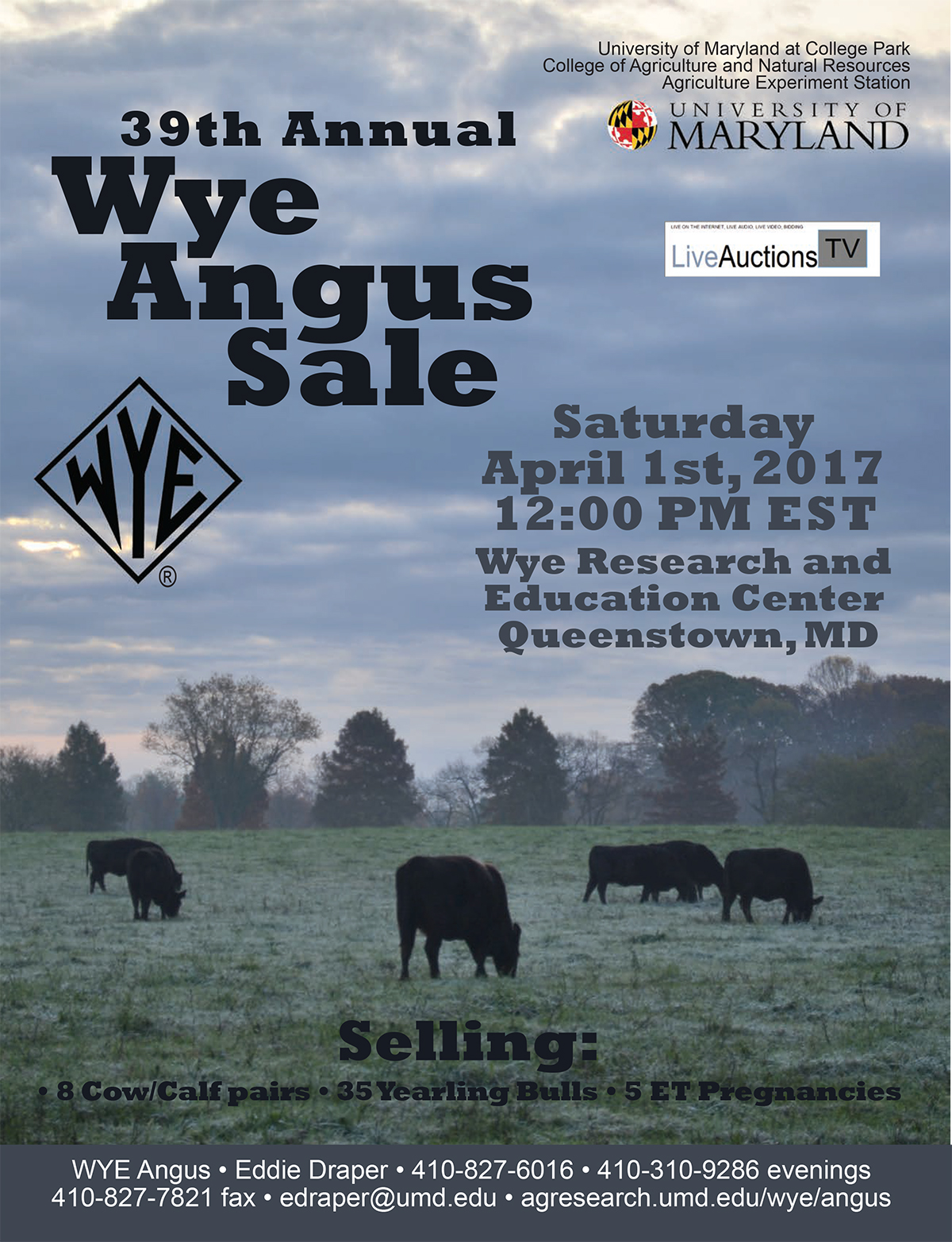 39th Annual Wye Angus Sale