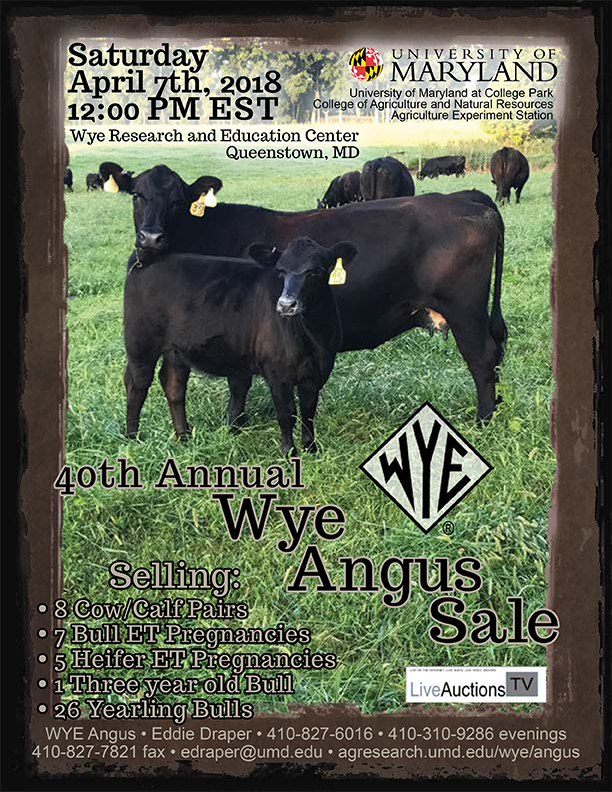 40th Annual Wye Angus Sale