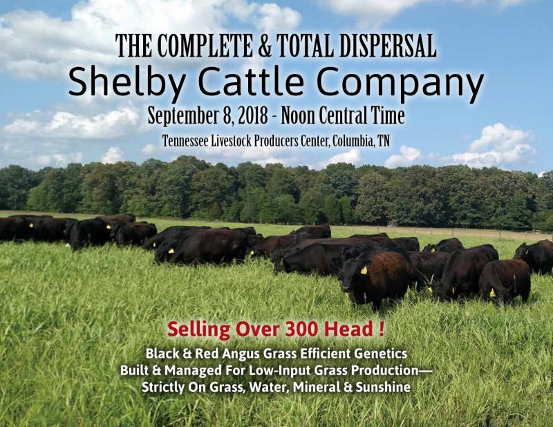 The Complete and Total Dispersal Shelby Cattle Company