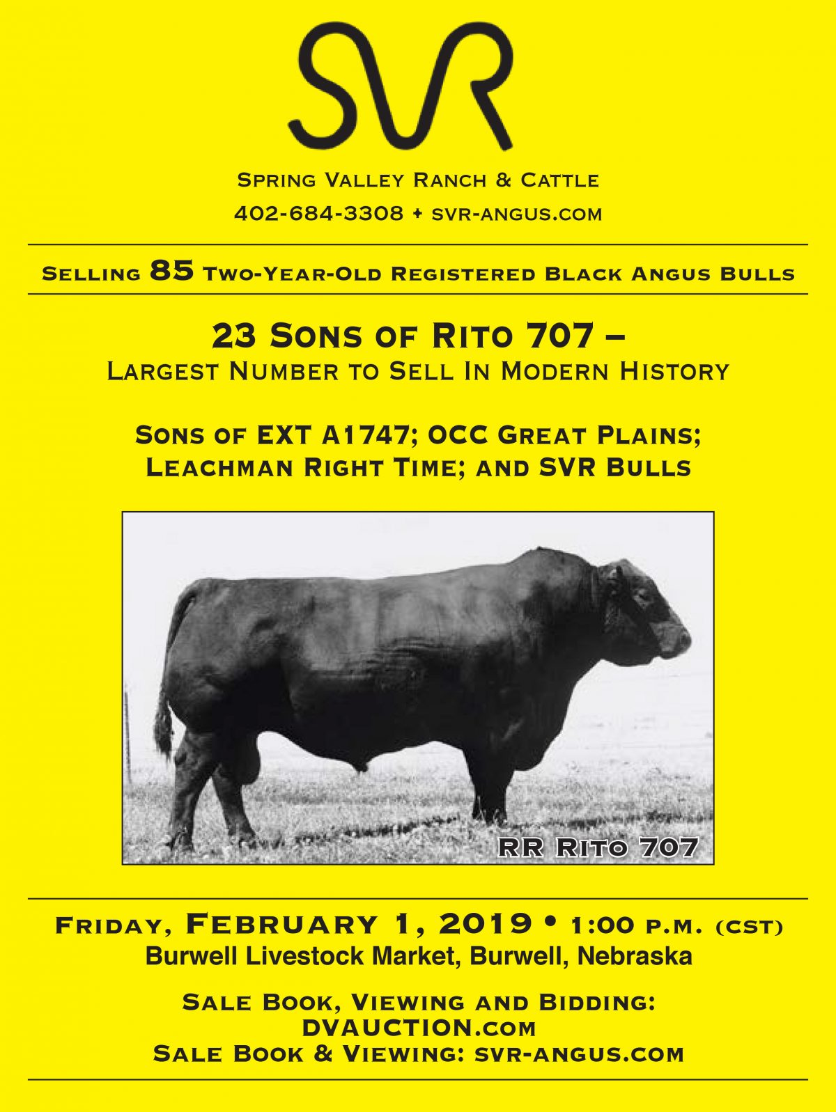 Spring Valley Ranch and Cattle Angus Bull Sale