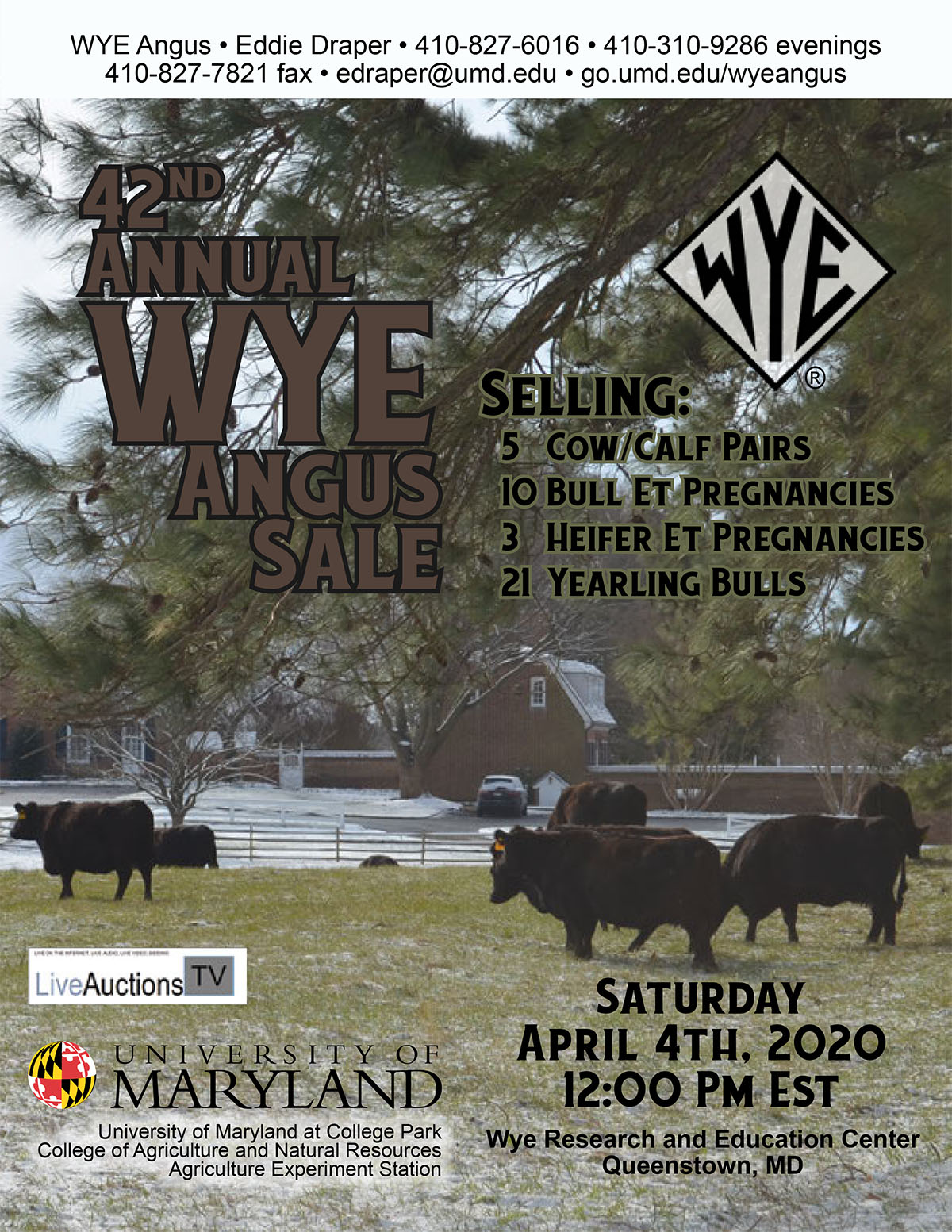 42nd Annual Wye Angus Sale
